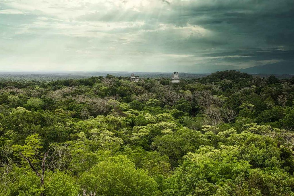 Forest of Tikal in Guatemala