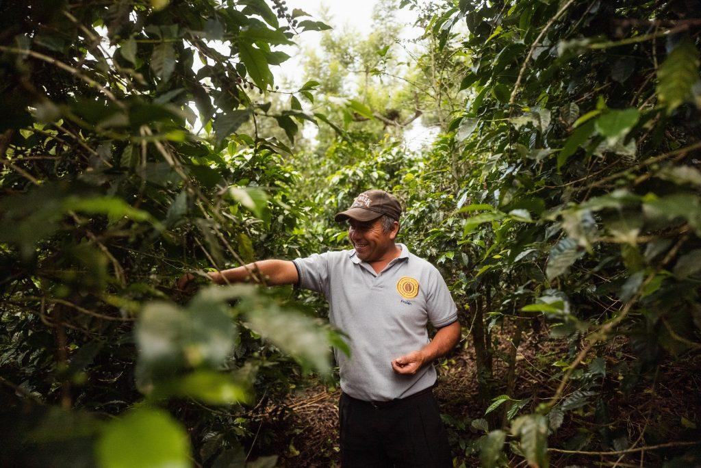 coffee farm in Antigua Guatemala