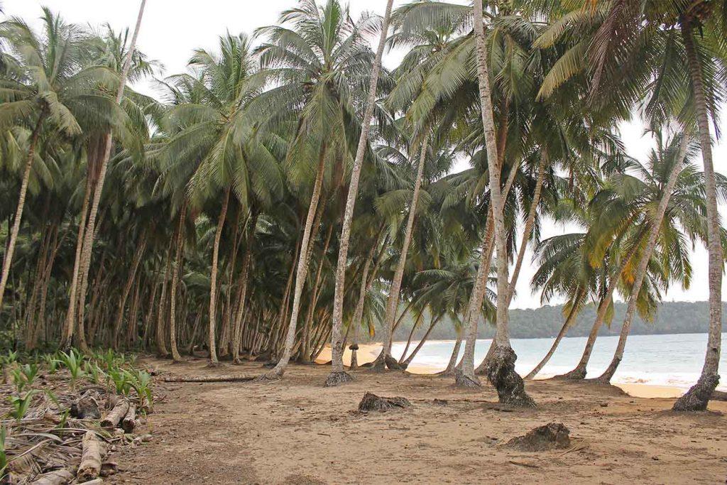 palm trees leading to the beach in praia grande principe