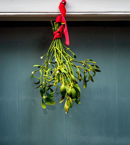 hanging mistletoe for christmas